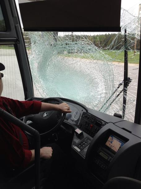Bus_versus_turkey_2_medium