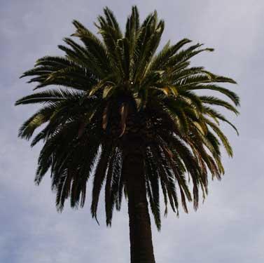 Tree1_medium