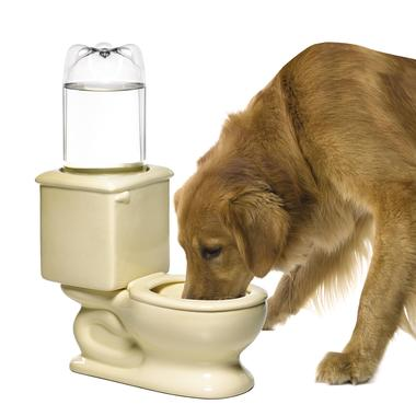 Dog_toilet_medium