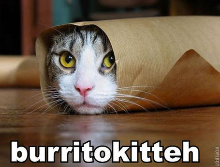 Burrito_kitteh_medium