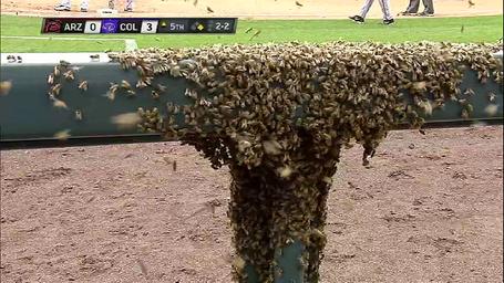 Bees_medium