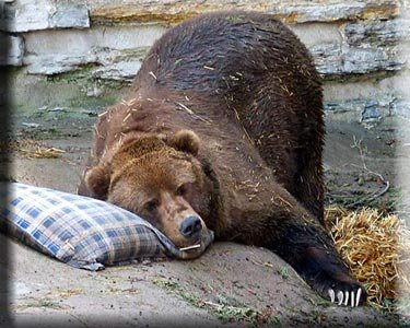 Sleeping-bear_medium