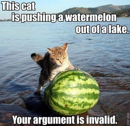 Catwatermelonlake_medium