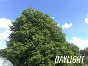 Daylight_300