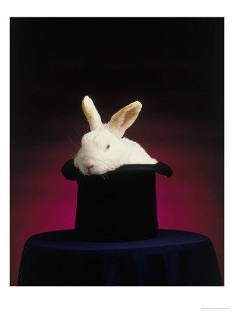 Rabbit_from_a_hat_medium