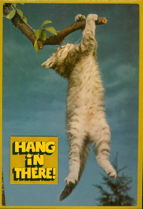Kitten-hang-in-there-poster_medium