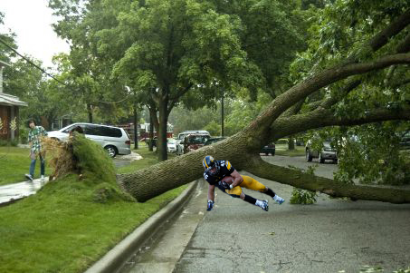 Tree_down_weisman_medium