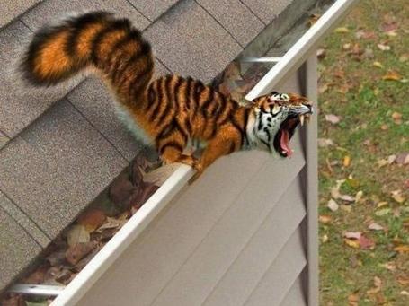 Tiger_sqwerl_medium