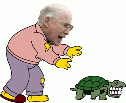 Snyder_turtle_medium