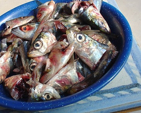 Fish_medium