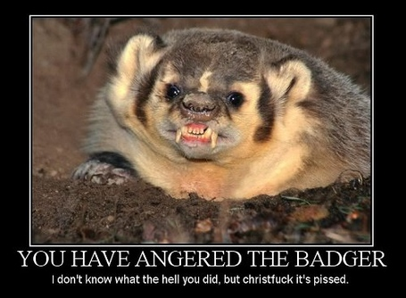 Angry_badger_medium