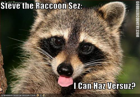 Stevetheraccoon_medium