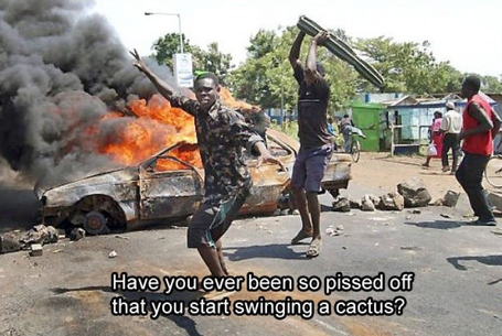 Angry_cactus_medium