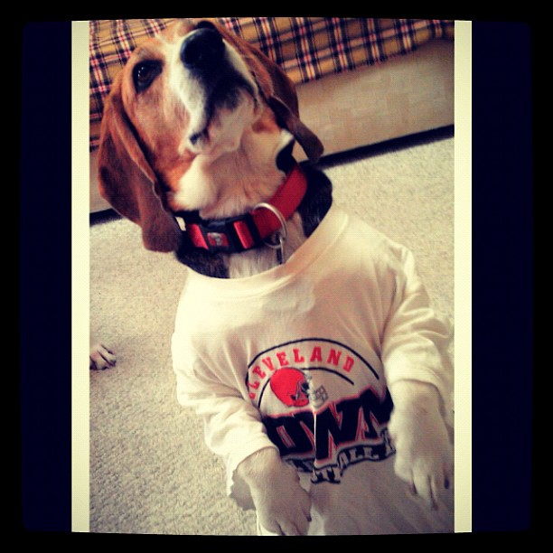 Brownsdog_medium
