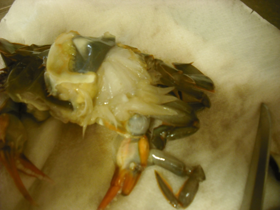 Cookin' ATVS Style: Fried Soft-Shelled Crabs Meuniere ...