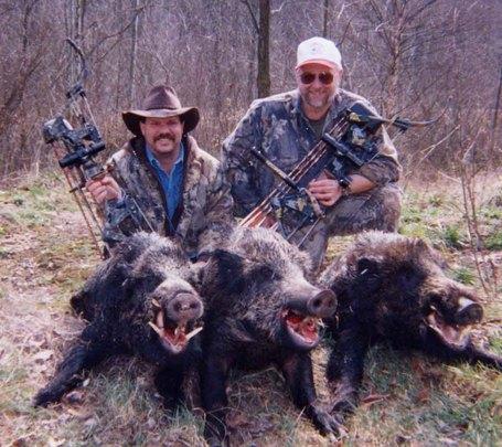 Hogs_medium