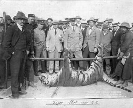 1915-dead-tiger