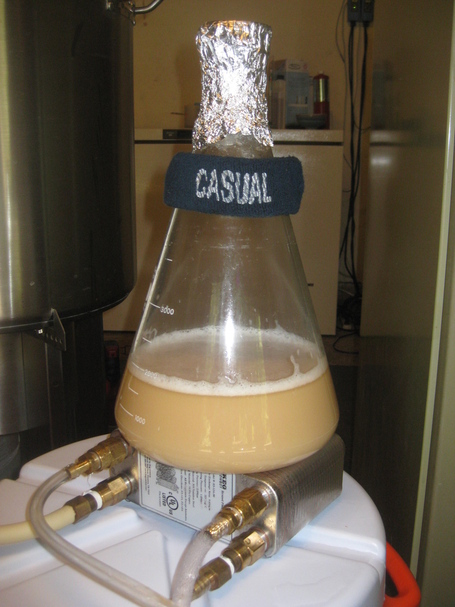 Yeast_starter_on_the_counter_flow_plate_chiller_medium