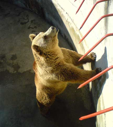 Bitola_zoo_bear_medium