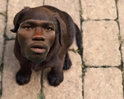Omeruo_puppy_medium