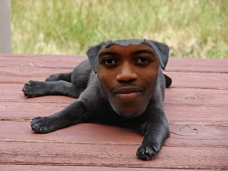 Chalobah_puppy_medium