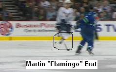 Martin_flamingo_erat_medium