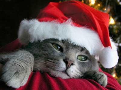Christmas_cat_medium
