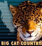 Bigcatcountry_medium
