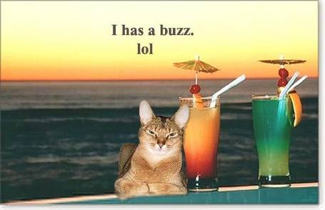 Buzz_cat_medium