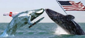 Whale-wars-finale2-300x134_medium