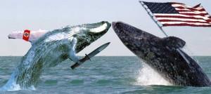 Whale-wars-finale2-300x134_medium