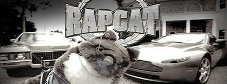 Rapcat_medium