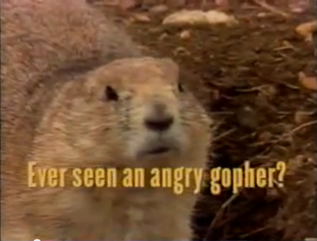Angry_gopher_medium