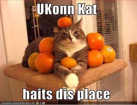 Ukonn_kat_medium