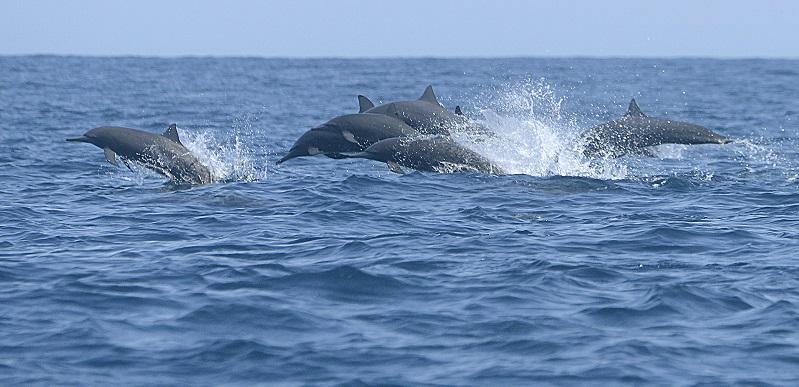 Dolphin08_medium
