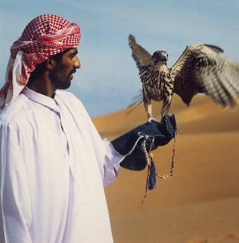 Falconry_tcm65-4917_medium