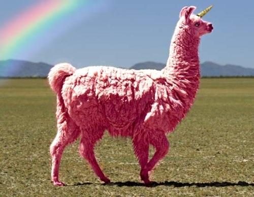 Pink_unillama_medium