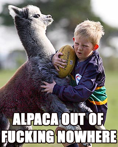 Alpacattack_medium