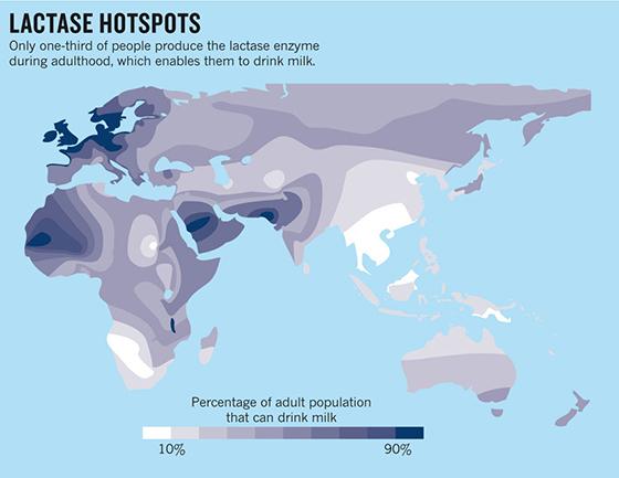 Lactase-hotspots