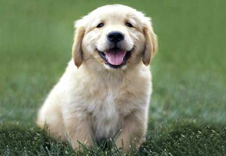 Puppy4_medium