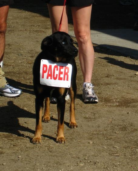 Pacer_dog_medium
