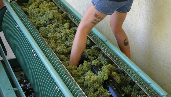 Clos-saron-foot-pressing-wine