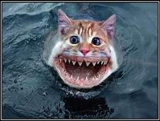 Cat_sharks_motifake_modified_medium