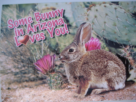 Bunnypostcard_medium