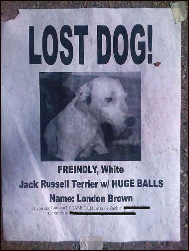 Dog_lost_huge_balls_medium