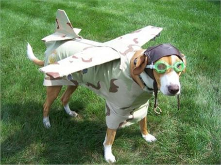Dogplane-ce6_medium