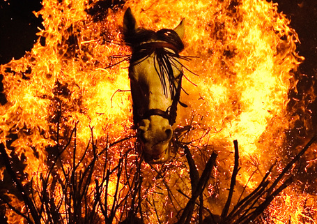 Firehorse_medium