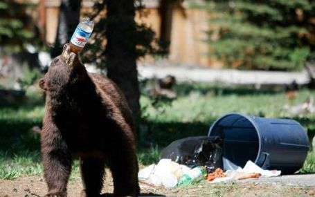 Funny-bear-picture-pepsi-choice-of-garbage-eaters_medium