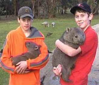 A_a_wombats_medium