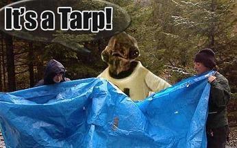 Tarp-30198_medium